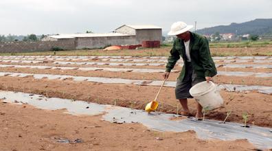 Mai Pha xây dựng nông thôn mới gắn với phát triển sản xuất nông nghiệp hàng hoá