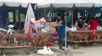 Phòng dịch H5N1 và H7N9 tại các chợ đầu mối: Khó khăn và bất cập