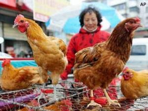 Ca nhiễm cúm gia cầm H7N9 thứ 2 ở thủ đô Bắc Kinh