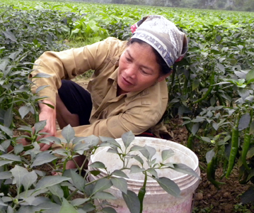 Phát triển nông nghiệp toàn diện theo hướng hiện đại