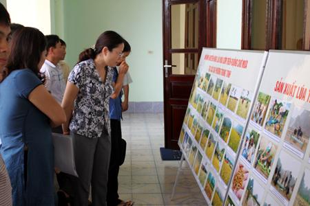 Trọng dụng nhân tài sau độc lập của Hồ Chí Minh
