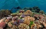 50% diện tích san hô vùng biển Côn Đảo đã phục hồi