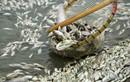 Bộ Y tế thông báo kết quả kiểm nghiệm mẫu hải sản ở miền Trung