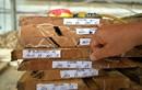 Doanh nghiệp Việt tự tin về nguồn gốc gỗ hợp pháp