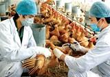 Virus cúm A/H7N9 nâng độc lực, Bộ Y tế tăng cường kiểm soát