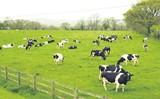 Vinamilk sẽ xuất khẩu sữa vào thị trường đông dân nhất thế giới