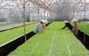 Tháo gỡ khó khăn thu hút đầu tư nông nghiệp bằng cơ chế