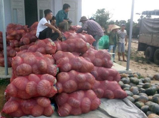 Big C Việt Nam tiêu thụ hàng chục tấn bí đỏ hỗ trợ nông dân Đác Lắc