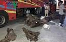 Bắt giữ xe khách vận chuyển hơn 800 kg nghi gỗ trắc