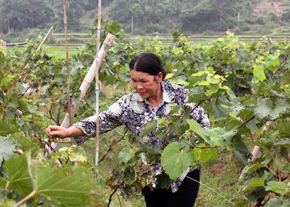 Phụ nữ chung sức xây dựng nông thôn mới