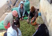 Xây dựng nông thôn mới: Sức dân ở Văn An