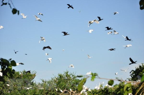 Vườn cò lớn nhất tỉnh Bắc Giang đứng trước nguy cơ bị xóa sổ