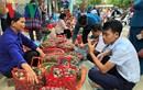 Mận Tam hoa chín rộ chào đón Tuần Văn hóa - Du lịch Bắc Hà