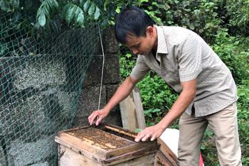 Truy xuất nguồn gốc sản phẩm: Bảo vệ thương hiệu mật ong Ngũ gia bì