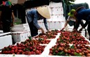 Trung Quốc dẫn đầu các thị trường nhập khẩu rau quả Việt Nam