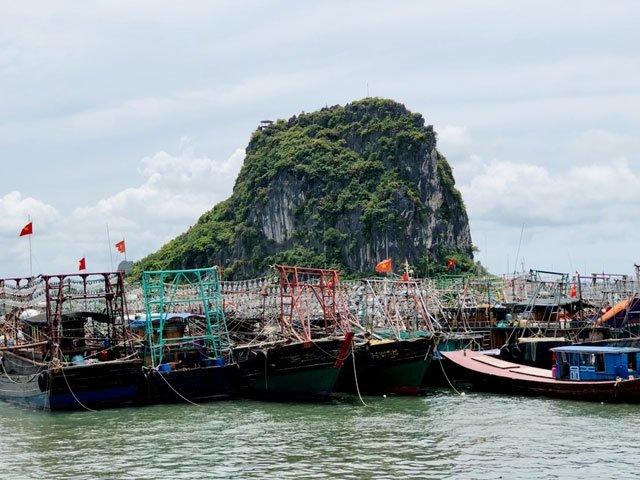 Quảng Ninh tạm ngừng cấp phép tàu du lịch tham quan vịnh Hạ Long