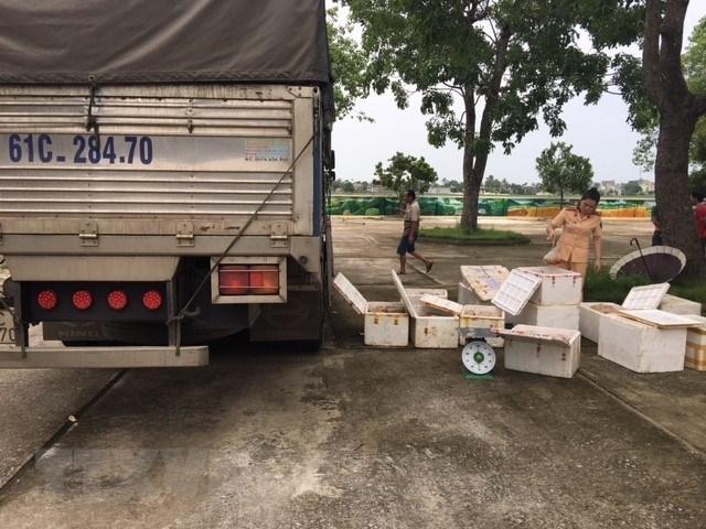 Bắt giữ xe tải vận chuyển 250kg thị gà đang bị phân hủy, bốc mùi