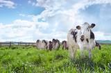 Đầu tư 4.000 tỷ đồng xây dựng trang trại bò sữa tại Cần Thơ