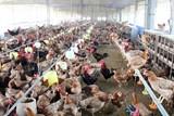 Chấn chỉnh công tác phòng chống dịch bệnh động vật trên cạn