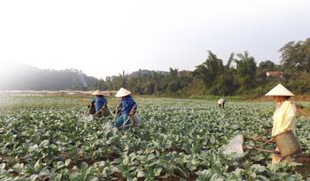 Hợp tác xã hoạt động lĩnh vực nông nghiệp: Khó khăn tiếp cận vốn vay