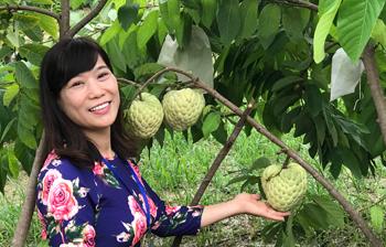 Hiệu quả kinh tế từ giống na Thái