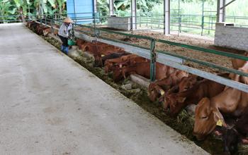 Tái cơ cấu nông nghiệp gắn với xây dựng NTM ở Bắc Sơn: Kết quả nổi bật