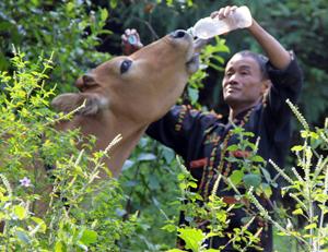 """Dự án """"Ngân hàng bò"""": Mang ấm no đến với người nghèo"""