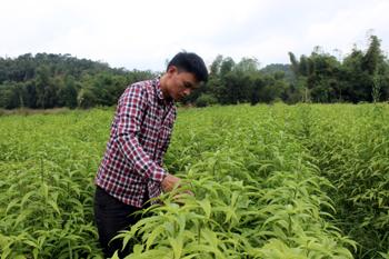 Xây dựng nông thôn mới ở Cao Lộc: Tập trung các mô hình sản xuất