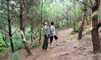 Đình Lập đổi thay từ rừng