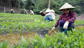Khó khăn trong thực hiện chính sách khuyến khích đầu tư vào lĩnh vực nông nghiệp