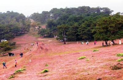 Mùa hội cỏ hồng trên cao nguyên Lang Biang