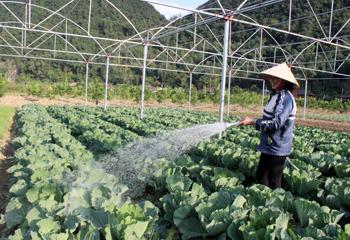 Bắc Sơn: Tập trung thu mùa, làm đông