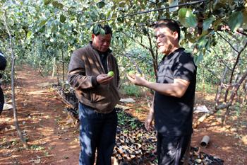Ứng dụng tiến bộ khoa học kỹ thuật thâm canh táo Đài Loan: Nâng cao năng suất, tăng thu nhập