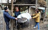 Chủ động phòng, chống đói, rét cho vật nuôi