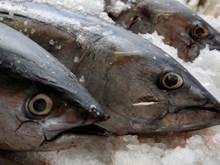 Mexico thua kiện Mỹ trong cuộc chiến 10 năm về dán nhãn cá ngừ