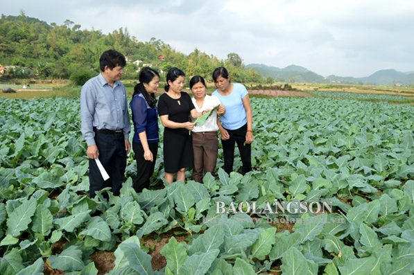 Đặc sản rau cải ngồng xứ Lạng
