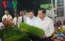 Khai mạc Festival lúa gạo, công bố thương hiệu lúa gạo Việt Nam