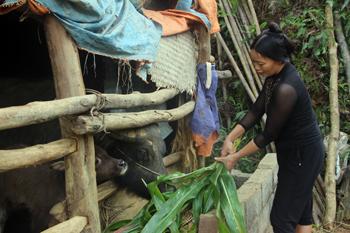 Cao Lộc chủ động phòng chống đói, rét cho đàn gia súc