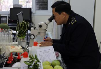 Xuất khẩu hoa quả: Cần chủ động thực hiện các tiêu chuẩn về truy xuất nguồn gốc