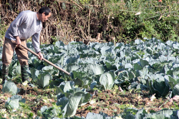 Sức vươn ở Hợp tác xã Dịch vụ và Sản xuất nông nghiệp Quang Lang