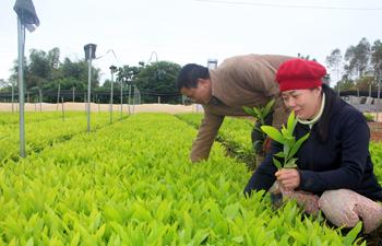 Hữu Lũng: Đảm bảo giống cây cho trồng rừng