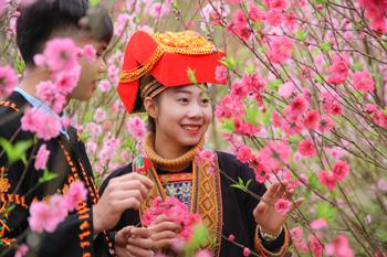 Lễ hội hoa Đào Xứ Lạng năm 2019: Sẵn sàng cho ngày khai hội