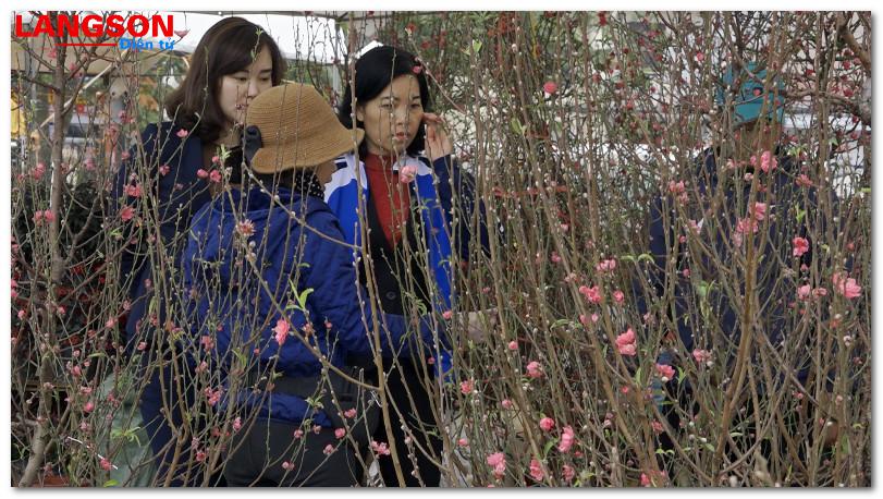 Lạng Sơn: Khai mạc chợ hoa, cây cảnh xuân Kỷ Hợi 2019