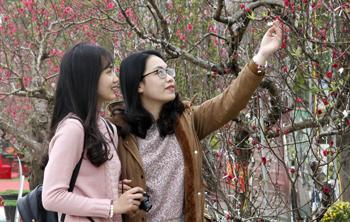 Du lịch vườn đào - Thêm sức hút cho mùa xuân Xứ Lạng