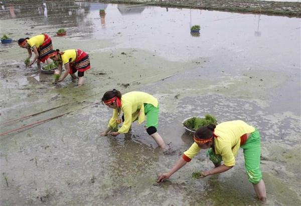 Thái Nguyên: Nô nức lễ hội xuống đồng xây dựng nông thôn mới