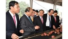 Thủ tướng đôn đốc thực hiện nhiệm vụ sau kỳ nghỉ Tết
