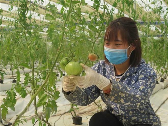 Israel trao bằng thạc sỹ nông nghiệp cho các sinh viên Việt Nam