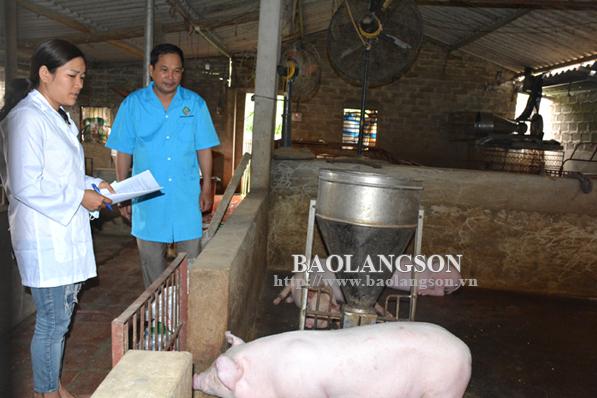 Hữu Lũng chủ động phòng chống dịch tả lợn châu Phi