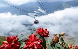 Tháng 4, về Sun World Fansipan Legend trẩy hội hoa đỗ quyên