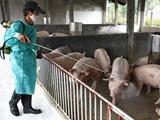 Hỗ trợ khách hàng vay bị thiệt hại do dịch tả lợn Châu Phi